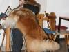 2011-11-13 Wesenstest Anouk - 68