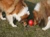2012-03-09 Futterkegel - 10