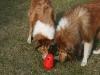 2012-03-09 Futterkegel - 13