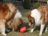 2012-03-09 Futterkegel - 16