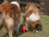 2012-03-09 Futterkegel - 18