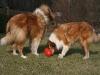 2012-03-09 Futterkegel - 20