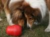 2012-03-09 Futterkegel - 3