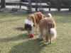 2012-03-09 Futterkegel - 9
