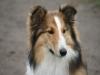 2012-04-24 Collies vom weiten Blick - 39
