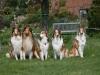 2012-04-24 Collies vom weiten Blick - 51