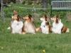 2012-04-24 Collies vom weiten Blick - 58