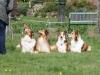 2012-04-24 Collies vom weiten Blick - 59