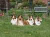 2012-04-24 Collies vom weiten Blick - 68