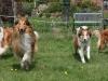 2012-04-24 Collies vom weiten Blick - 76