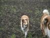 2012-04-24 Collies vom weiten Blick - 9