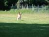 2012-05-20 PHV Misburg - Grace - 27