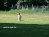2012-05-20 PHV Misburg - Grace - 28