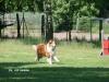 2012-05-20 PHV Misburg - Grace - 29