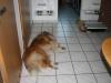 2012-07-23 Einzug Giny - 1