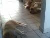 2012-07-23 Einzug Giny - 6