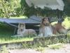 2012-07-24 Garten - 10