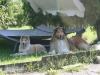 2012-07-24 Garten - 11