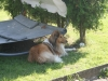 2012-07-24 Garten - 3