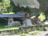 2012-07-24 Garten - 7
