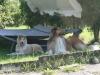 2012-07-24 Garten - 8