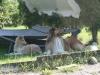 2012-07-24 Garten - 9