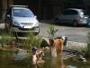 2012-07-27 Schwimmen - 1