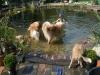 2012-07-27 Schwimmen - 12