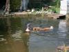2012-07-27 Schwimmen - 13