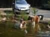 2012-07-27 Schwimmen - 2