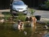 2012-07-27 Schwimmen - 3
