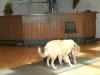 2012-09-28-obedience-seminar-28