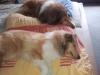 2012-10-12 Müde sind wir - 3