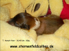 2012-10-22 H-Wurf - Hatschi-Pooh - 13
