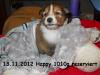 2012-11-13 H-Wurf Happy - 4
