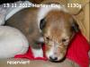 2012-11-13 H-Wurf Harle King - 1