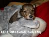 2012-11-13 H-Wurf Hatschi-Pooh - 7