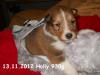 2012-11-13 H-Wurf Holly - 5