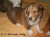 2012-11-17 H-Wurf Holly - 5
