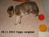 2012-11-28 H-Wurf Happy - 4