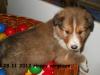 2012-11-28 H-Wurf Happy - 4_1