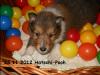 2012-11-28 H-Wurf Hatschi-Pooh - 7_1