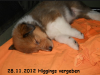 2012-11-28 H-Wurf Higgings - 2