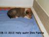 2012-11-28 H-Wurf Holly - 5
