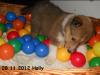 2012-11-28 H-Wurf Holly - 5_1