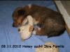 2012-11-28 H-Wurf Honey - 6
