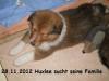 2012-11-28 H-Wurf Huxlee - 3
