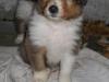 2012-11-29 H-Wurf Happy - 4
