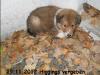 2012-11-29 H-Wurf Higgings - 2