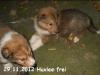 2012-11-29 H-Wurf Huxlee - 3
